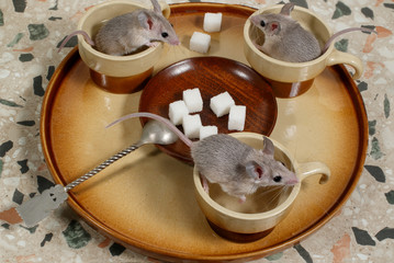 Close-up three mice sits in coffee cups on a round tray with plate of sugar . Top view.
