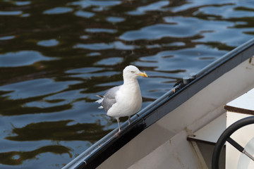 seagull on the edge of a boat