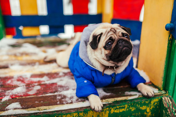 Pug dog in winter clothes sitting on playground outdoors. Pet waiting for command
