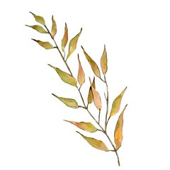 Isolated Orange Willow branches illustration element. Watercolor background illustration set.