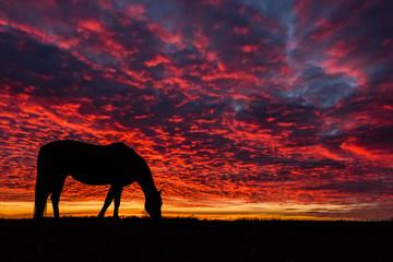 Horse Grazing Under Vibrant Sky