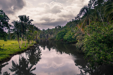 View of river in jungle, Puerto Viejo, Heredia Province, Costa Rica