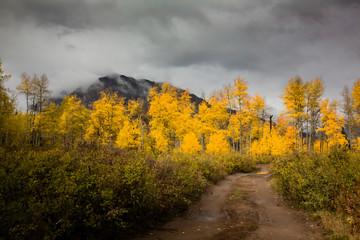 Marcellina Mountain in autumn, Kebler Pass, Colorado, USA