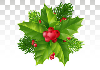 Pine tree branch, Holly leaves and red berry . Christmas decoration. Vector illustration. Eps 10.