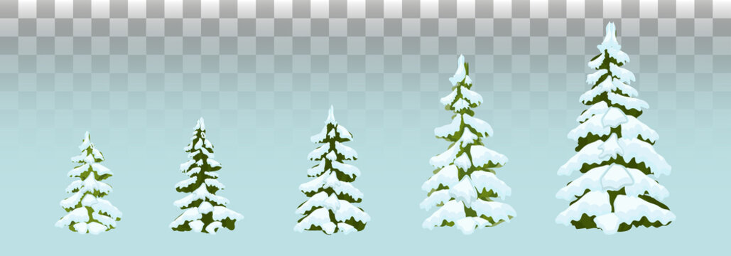 Firs in the snow.  set of Christmas trees with snow. Isolated. Festive decor. Drawing. Christmas. Vector illustration. Eps 10.