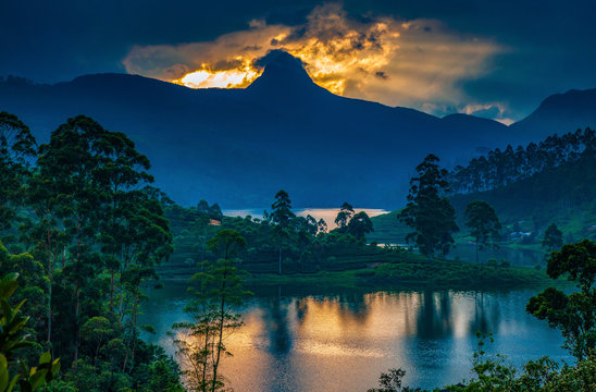 panorama of the tea plantations at sunset - Sri Pada peak in the background