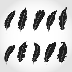 Vector feathers icon,sign,symbol, set, collection isolated vector