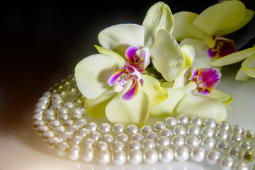 pearl and yellow orchid on a white glass