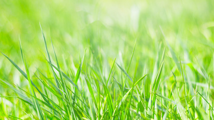 spring background, juicy green young grass, spring, bright background, texture