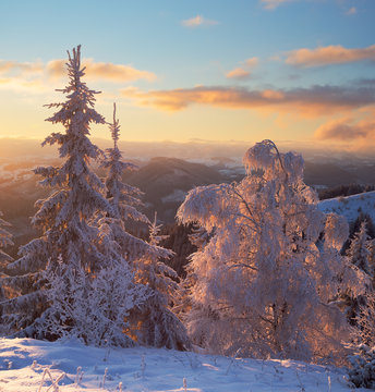 Frozen trees in Bukovina region, Ukraine