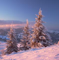 Snowy trees in evening light. Carpathians, Ukraine