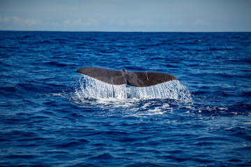 Whale tail on water surface, closeup shot, ocean background