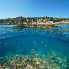 Coastline near Palamos in Spain and a school of fish with rock underwater, split view half above and below water surface, Cala Bona, Costa Brava, Mediterranean sea