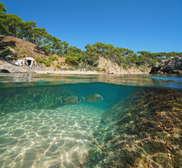 Spain Costa Brava Mediterranean beach with tourists in summer and fish with rock and sand underwater, split view half above and below water surface, Cala Estreta, Palamos