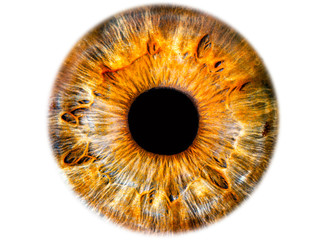 Iris ,das menschliche Auge, freigestellt Wall mural