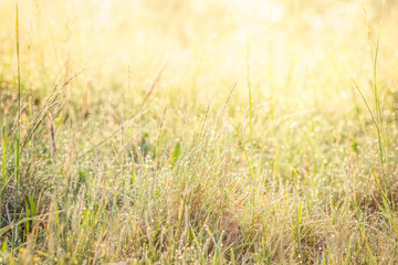 Summer meadow, green grass field in warm sunlight, nature background concept, soft focus, warm pastel tones.