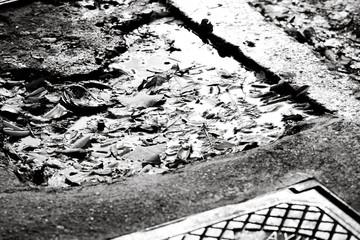 Autumn puddle on the street