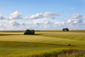Field on Salisbury plain in Wiltshire
