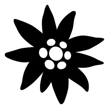 Edelweiss icon, black and white, vector