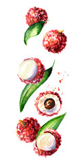 Falling ripe lychee, vertical composition. Watercolor hand drawn illustration,  isolated on white background