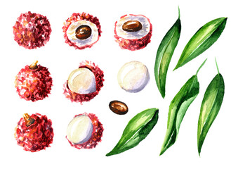 Fresh lychee fruits and leaves elements set. Watercolor hand drawn illustration  isolated on white background