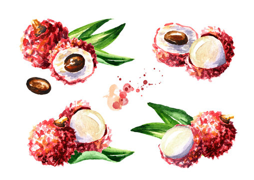 Fresh lychee fruits set. Watercolor hand drawn illustration  isolated on white background
