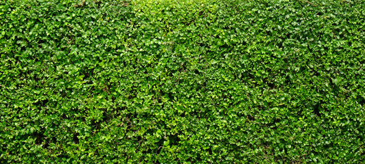 Green tree wall texture