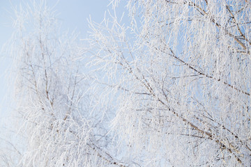 Frozen branches on a tree against a blue sky