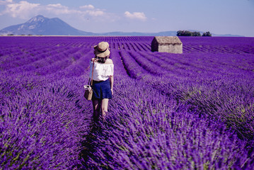Poster Lavender Lavender field - Valensole, France - So violet! Enjoy active summer on the lavender field. One touristic place is in Valensole, France. So impressive! nThe violet everywhere!