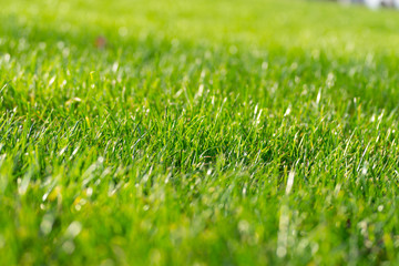 Close up detail of a green grass field illuminated by a nice soft light