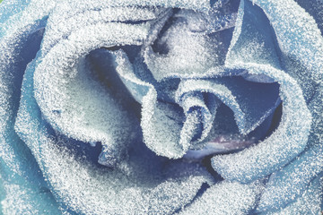 Blue rose covered with snow.