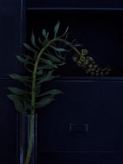 Abstraktes Blumen Stillife vor Metall Regal