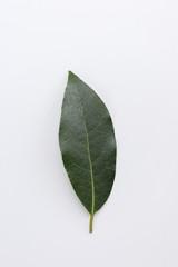 Single fresh laurel or bay leaf on a white