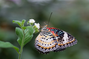 beautiful butterfly closeup in nature