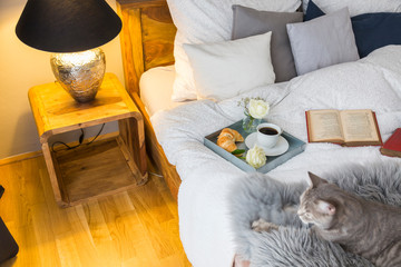 Cat Lying By Open Book On Bed By Glowing Lamp