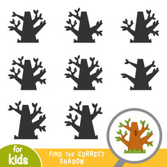Find the correct shadow, game for children, Oak tree