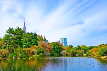 View of the beautiful garden with colorful trees in autumn at Shinjuku Gyoen Garden in Tokyo, Japan.