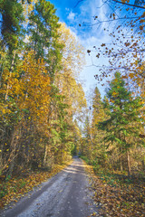 Autumn russian forest
