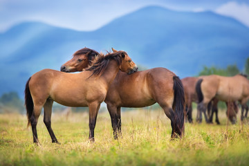 Horses on herd rest on spring pasture against mountain