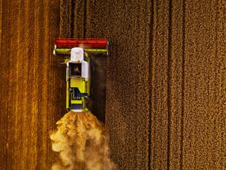 Wall Mural - Harvesting the golden grains
