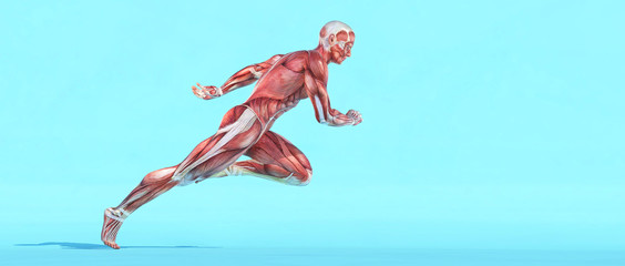 Male muscular system running.