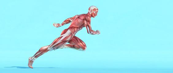 Male muscular system running. Fototapete