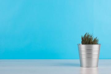 cactus con sfondo azzurro