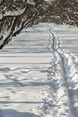 Footpath in the snow in a snow-covered apple orchard