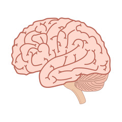 Human brain icon. Brain isolated on a white background. Vector illustration.