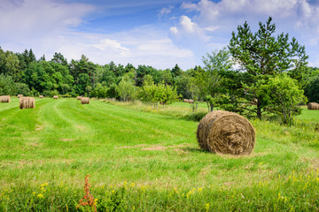 Beautiful meadow with green grass and hay roll on blue sky background with clouds. Typical summer landscape on Saaremaa island, Estonia