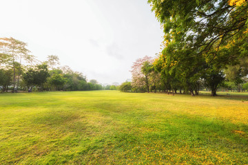 Scenery green park and meadow with sunlight in autumn, Beautiful green grass at the natural park