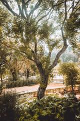 Tree near path in garden