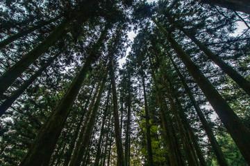 제주도 숲길 도로사진