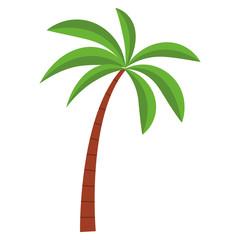Tree palm beach